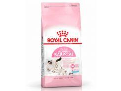 Корм корм для котят и кошек Royal Canin Mother Babycat в период беременности, 10 кг