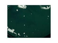 Пигментная паста Monicolor-B LT-зеленая