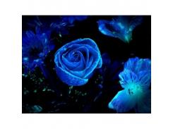 Краска флуоресцентная AcmeLight для цветов голубая