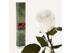 Долгосвежая роза Florich в подарочной упаковке Белый бриллиант (7 карат на коротком стебле) (1117-WT01)