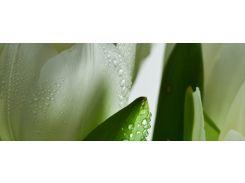 Плитка облицовочная АТЕМ Tulip Maxi 1 W (16963)