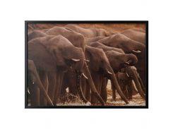 BJORKSTA Картину с рамой, африканские слоны, черный