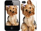 Цены на Чехол на iPhone 4 Йоркширский ...
