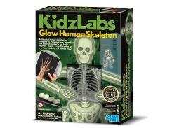 Набор для творчества 4M Светящийся скелет человека 00-03375
