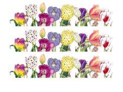 Фото-дизайн 0044 Тюльпаны разноцвет