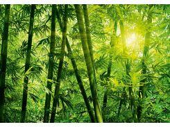 Фотообои 123 Бамбуковый лес 366*254 (8ч)
