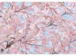 Фотообои 155 Розовое цветение 366*254 (8ч)