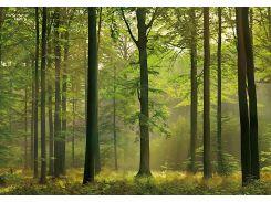 Фотообои 216 Осенний лес 366*254 (8ч)