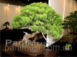 Комплект для выращивания бонсай Семена, Инструкция по выращиванию