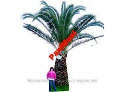 Морозостойкая Джемовая пальма семена + инструкция