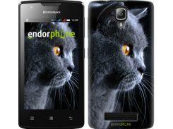 """Чехол на Lenovo A1000 Красивый кот """"3038u-157-7673"""""""
