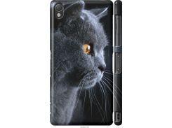 Чехол на Sony Xperia Z3 D6603 Красивый кот (3038c-58-22700)