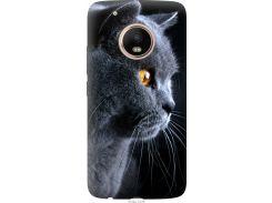 Чехол на Motorola Moto G5 PLUS Красивый кот (3038t-1038-22700)