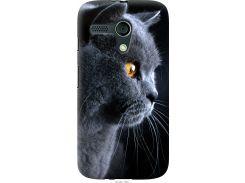 Чехол на Motorola Moto G Красивый кот (3038u-366-22700)