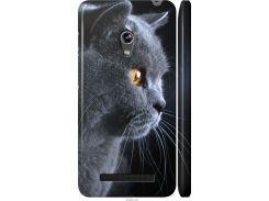 Чехол на Asus Zenfone 5 Красивый кот (3038m-81-22700)