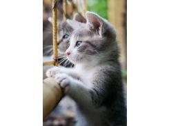 Обогреватель-картина инфракрасный настенный ТРИО 400W 100 х 57 см котята (gr_010014)