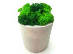 Стабилизированный мох в горшке из гипса (10 × 7,5 см), SO decor