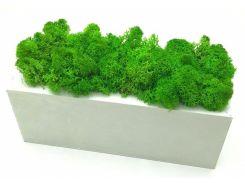 Стабилизированный мох в горшке, из белого дерева 20 × 7 см, SO Decor