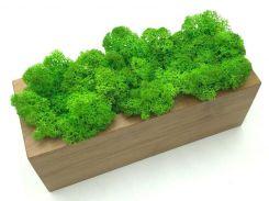 Стабилизированный мох в горшке, из дерева 20 × 7 см, SO Decor