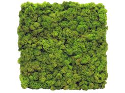 Стабилизированный мох SO Green Декоративная стена из мха 1м² (004)