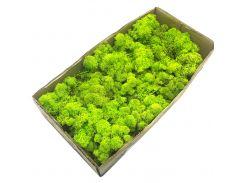 Стабилизированный мох SO Green салатовый 0,5 кг (055)