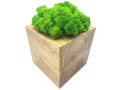 Стабилизированный мох SO Green Соу Грин в горшке из дерева 8 × 8 см (002)