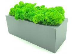 Стабилизированный мох SO Green Соу Грин в горшке из дерева 20 × 8 см (0032)
