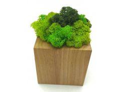 Стабилизированный мох SO Green Соу Грин в горшке из дерева 8 × 8 см (00201)