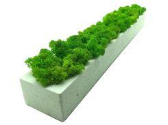 Стабилизированный мох SO Green Соу Грин в бетонном кашпо 50×6 см (00121)