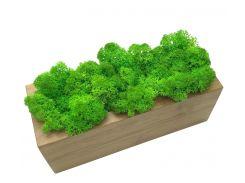 Стабилизированный мох SO Green Соу Грин в деревянном кашпо 20×8 см (031)