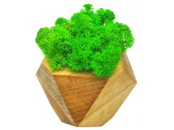 Стабилизированный мох SO Green Соу Грин в деревянном кашпо 8×8 см (022)