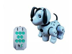 Животное 987 (Собака)